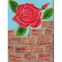 Trandafirul Vecinului.